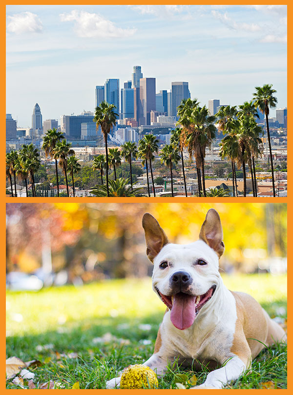 Beverly Hills Mobile Dog Grooming