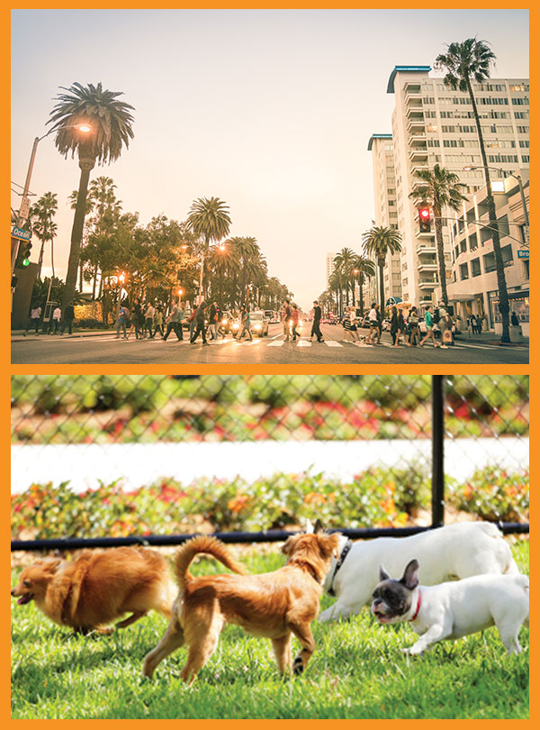 Los Angeles Mobile Dog Grooming