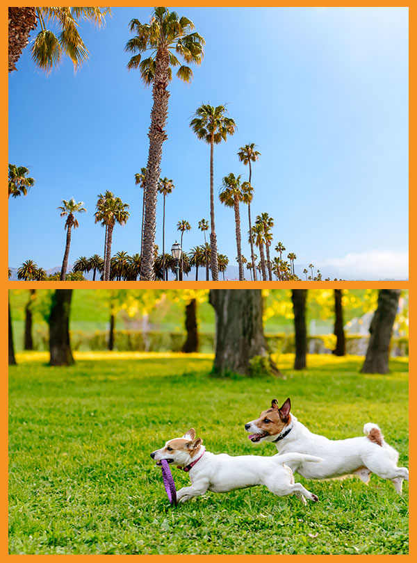 West Hollywood mobile dog grooming